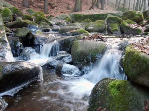stream-forest